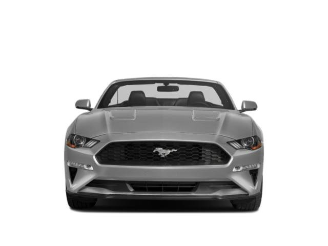 Used 2019 Ford Mustang in Nanuet, NY